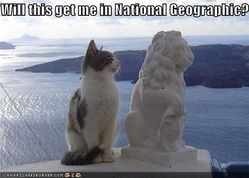 caption,captioned,cat,imitating,lion,national geographic,posing,question,sculpture