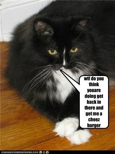 Cheezburger Image 5056783616