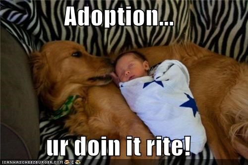 adopted,adoption,baby,doing it right,family,golden retriever,kisses,love
