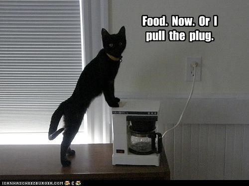 Food. Now. Or I pull the plug.