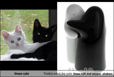 black and white,Cats,hugs,salt and pepper,salt and pepper shakers