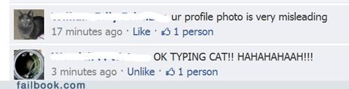 typing cat profile pic misleading profile picture