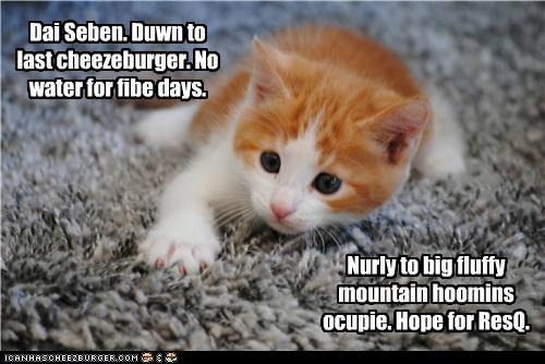 Cheezburger Image 5060175616