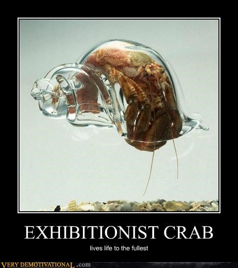 clear,crab,exhibitionist,Pure Awesome,shell