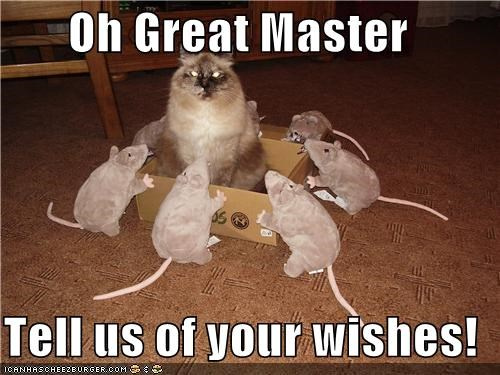 caption,captioned,cat,great,master,rat,rats,stuffed animal,stuffed animals,tell,wishes,worshipping