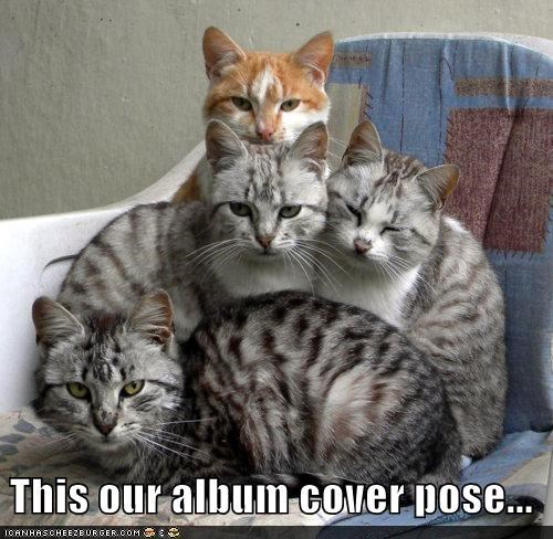 album caption captioned cat Cats cover pose posing tabbies tabby this - 5061236480