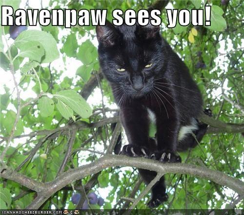 Ravenpaw sees you!