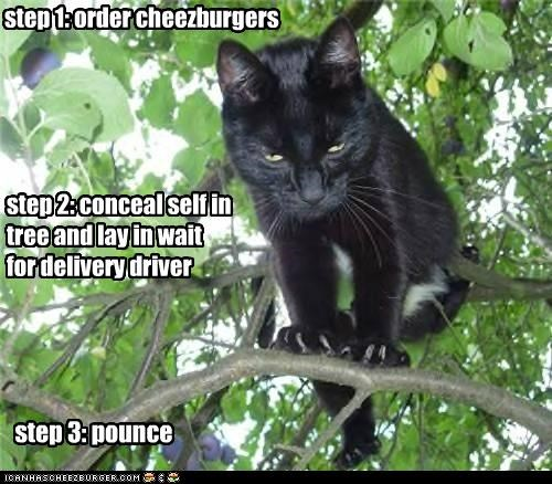 foolproof cheezburger gettin plan