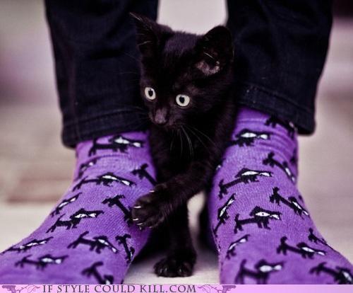Cats cool accessories socks - 5062284032