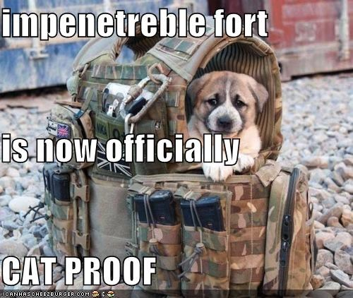 dogs political pictures soldiers - 5062514944