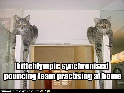 kittehlympic synchronised pouncing team practising at home