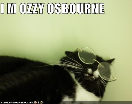 caption captioned cat glasses im Ozzy Osbourne TLL totally looks like - 5064000000