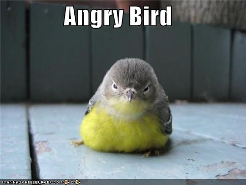 angry angry birds bird caption captioned IRL - 5064054272