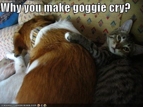 Why you make goggie cry?