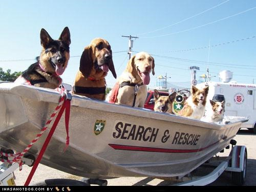 bloodhound,boat,corgi,dogs with jobs,german shepherd,goggie ob teh week,golden retriever,mixed breed,Search and Rescue,Search and Rescue Dogs,working dogs
