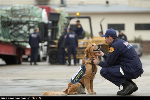 earthquake goggie ob teh week golden retriever Los Angeles Fire Department Search and Rescue Search and Rescue Dog - 5064463872