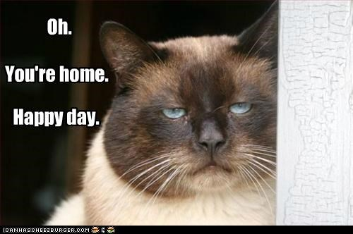 caption captioned cat day happy home Oh pokerface sarcasm siamese you - 5064526848