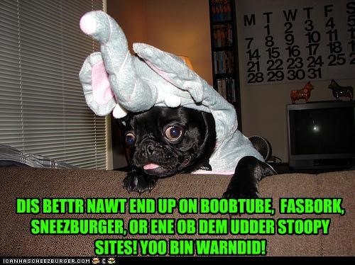 best of the week,costume,elephant,elephant costume,pug,social networking,youve-been-warned