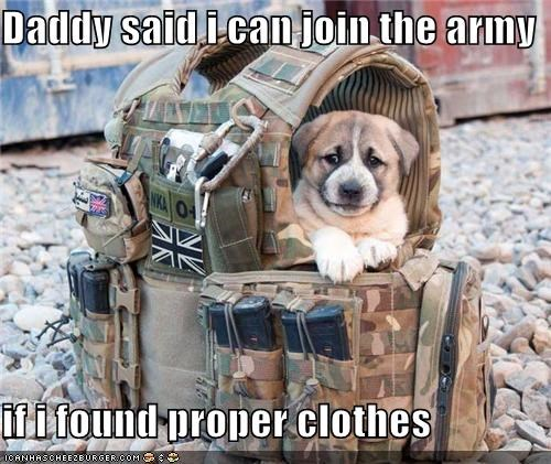 army army clothes clothes daddy said enlist enlisting military puppy soldier whatbreed