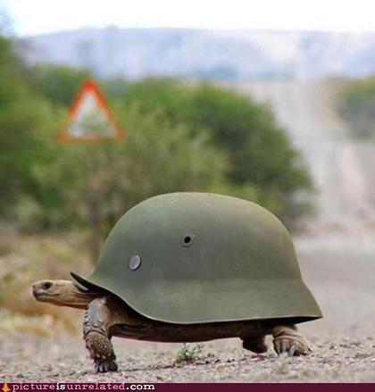 helmet shell turtle wtf - 5064658176
