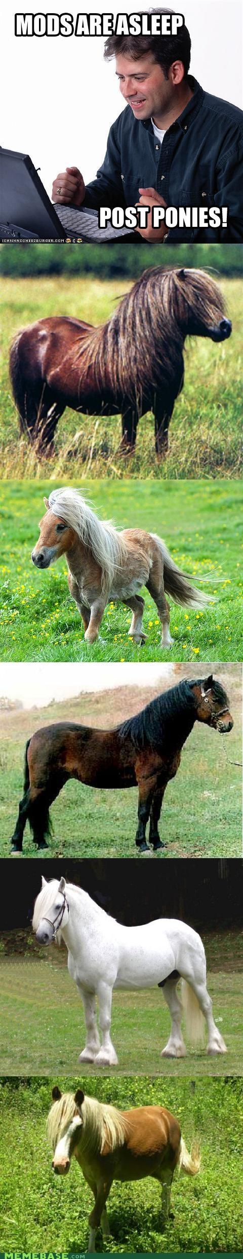 horse IRL Net Noob pony - 5064679680