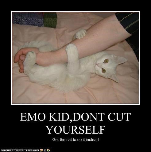 animals arms Cats cutting emo I Can Has Cheezburger - 5064838144