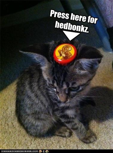 bonks,button,caption,captioned,cat,head,here,kitten,press