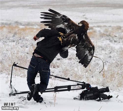 attack,cameraman,classic,eagle,hawk,mother nature ftw,photography