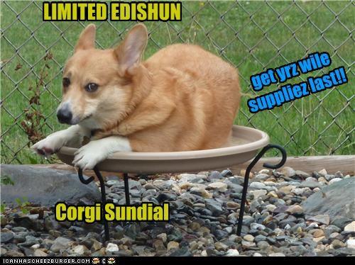 LIMITED EDISHUN Corgi Sundial get yrz wile suppliez last!!