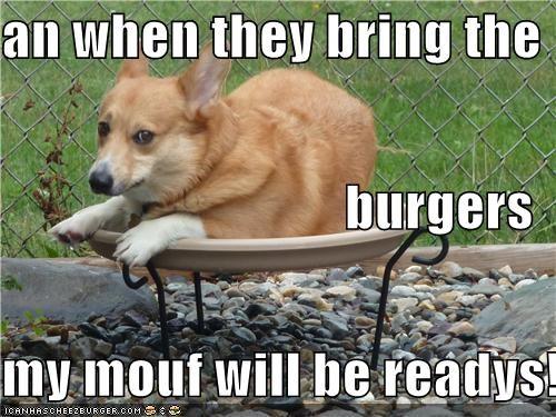Cheezburger Image 5065416704