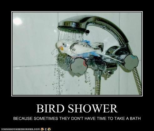 BIRD SHOWER BECAUSE SOMETIMES THEY DON'T HAVE TIME TO TAKE A BATH