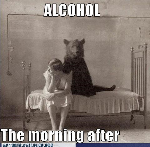 alcohol,bad decision,bear,bed,morning after,regret