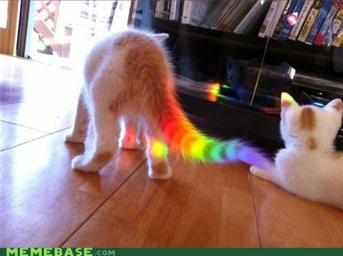 IRL Nyan Cat poptart rainbow tail - 5065856768