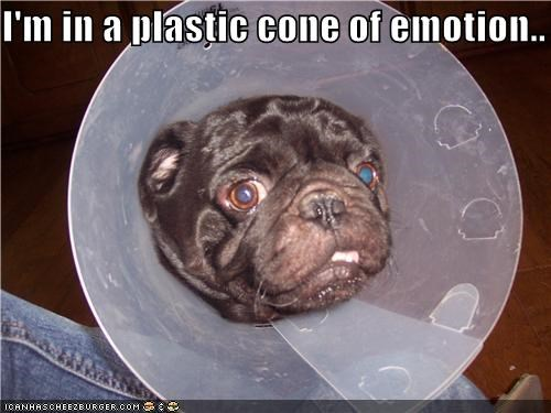 animals cone of shame dogs emotions i has a hotdog pugs Sad