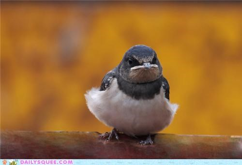 baby,bird,fabulous,frumpy,jealous,jealousy,reason,squee spree,swallow