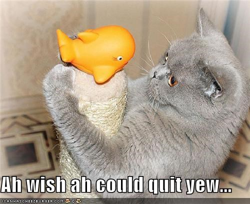 animals brokeback mountain Cats I Can Has Cheezburger love quit you quotes toys - 5066658304