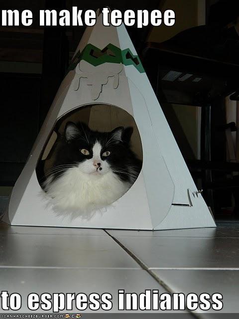 animals Cats I Can Has Cheezburger wat - 5066690304