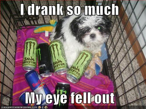 dogs,drinking,energy,energy drinks,eyes,i has a hotdog,java,red bull,wtf