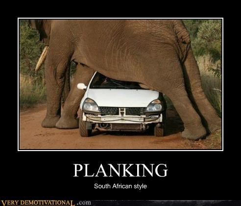 elephant Hall of Fame Planking Pure Awesome scary South Africa