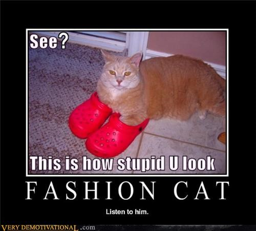 animals,cat,crocs,fashion,Hall of Fame,hilarious,stupid
