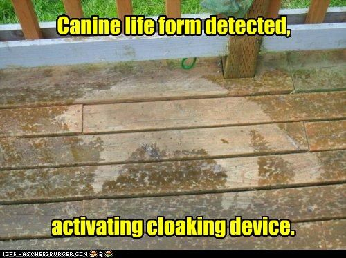 activating canine caption captioned cat cloaking detected device form life silhouette - 5068004096