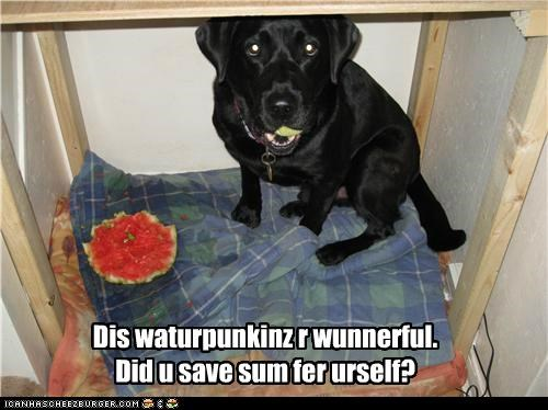 Dis waturpunkinz r wunnerful. Did u save sum fer urself?