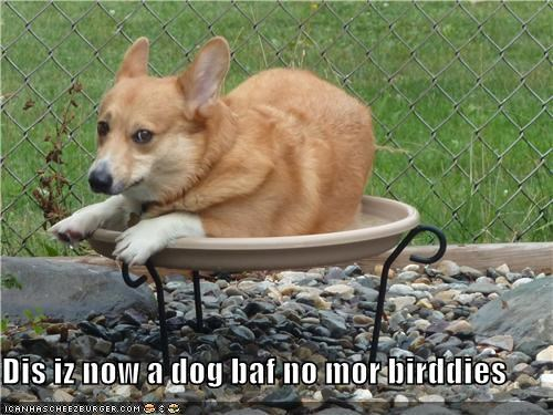 Dis iz now a dog baf no mor birddies