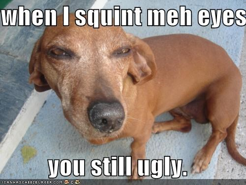 dachshund,mixed breed,nope still ugly,squint,squinting,ugly,youre-ugly