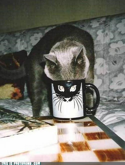 Animal Bomb cat coffee mug face