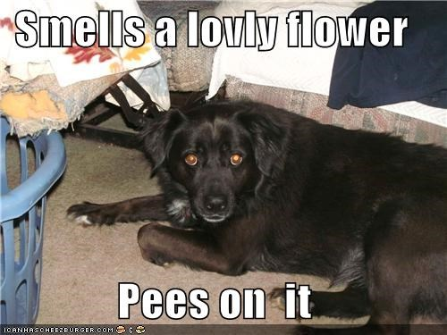 Flower,flowers,mixed breed,pee,pee on it,scumbag,scumbag dog,whatbreed