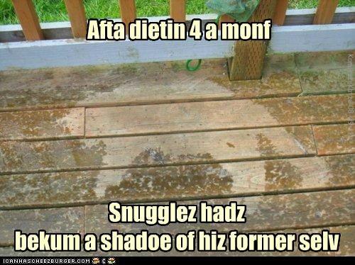 Cheezburger Image 5068756224