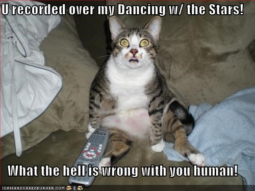 caption,captioned,cat,confounded,Dancing With The Stars,disbelief,do not want,horrified,recorded,remote,tape,upset,you