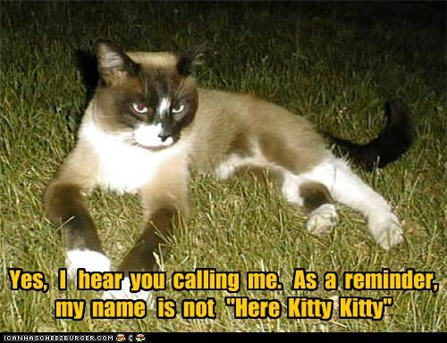 calling caption captioned cat here kitty name not reminder yes - 5068794624
