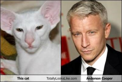 Anderson Cooper,cat,Hall of Fame,journalists,sexy beast,television personalities